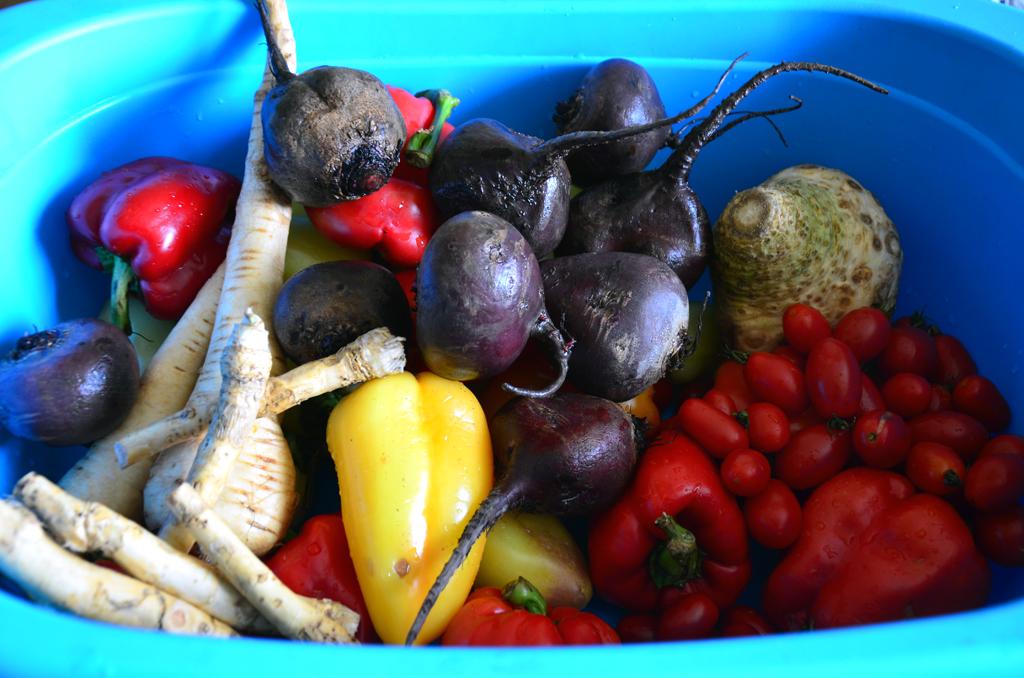 заготовки на зиму: вымытые овощи в большом тазу