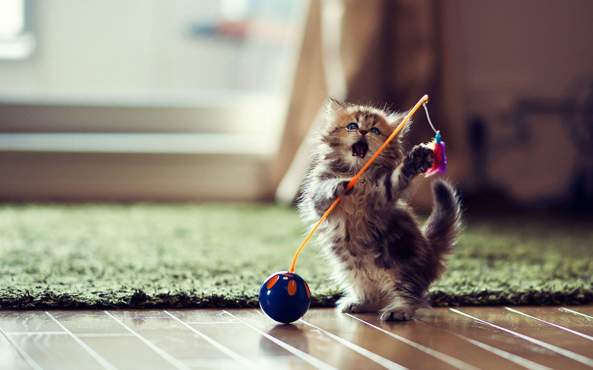 шалость котика