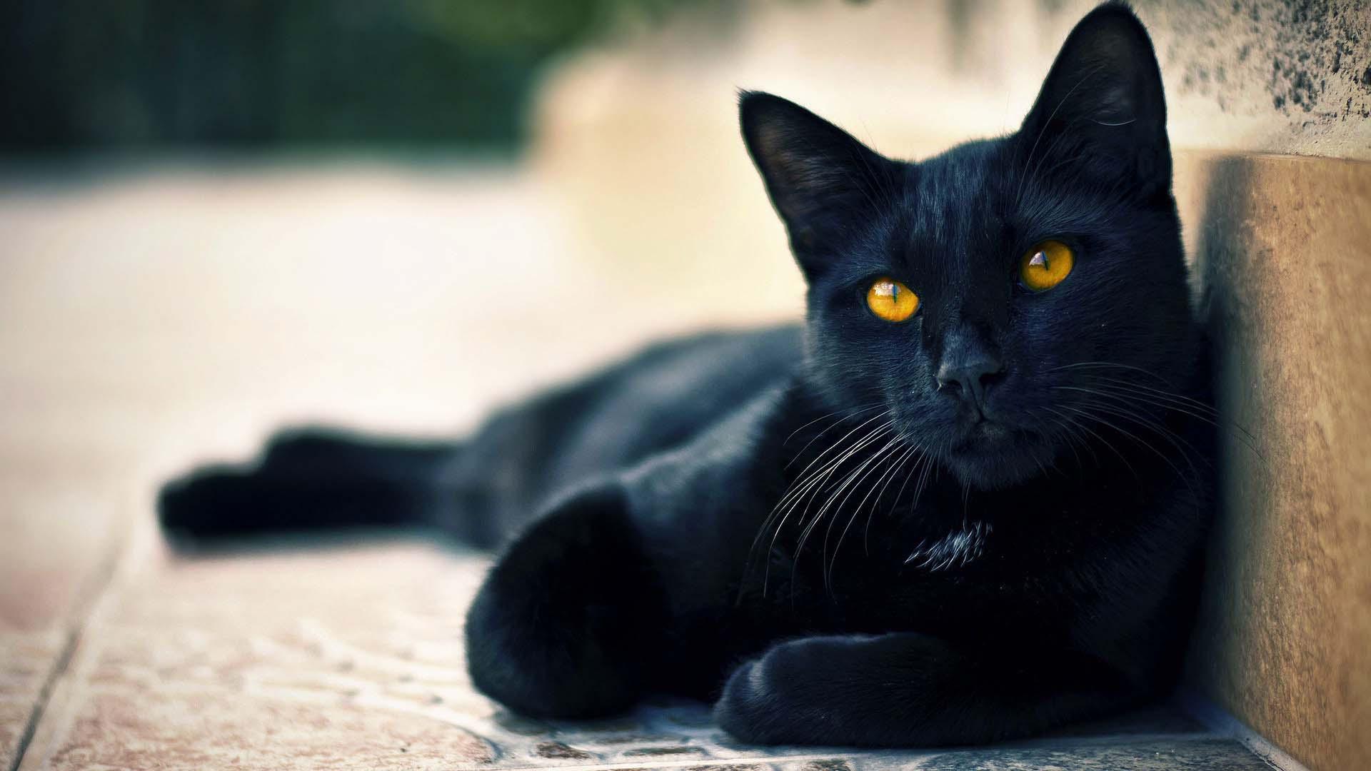 немного адреналина: чёрный кот