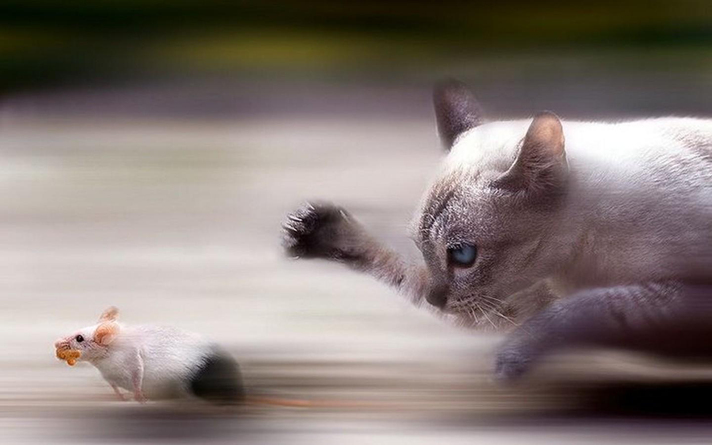быстрый кот