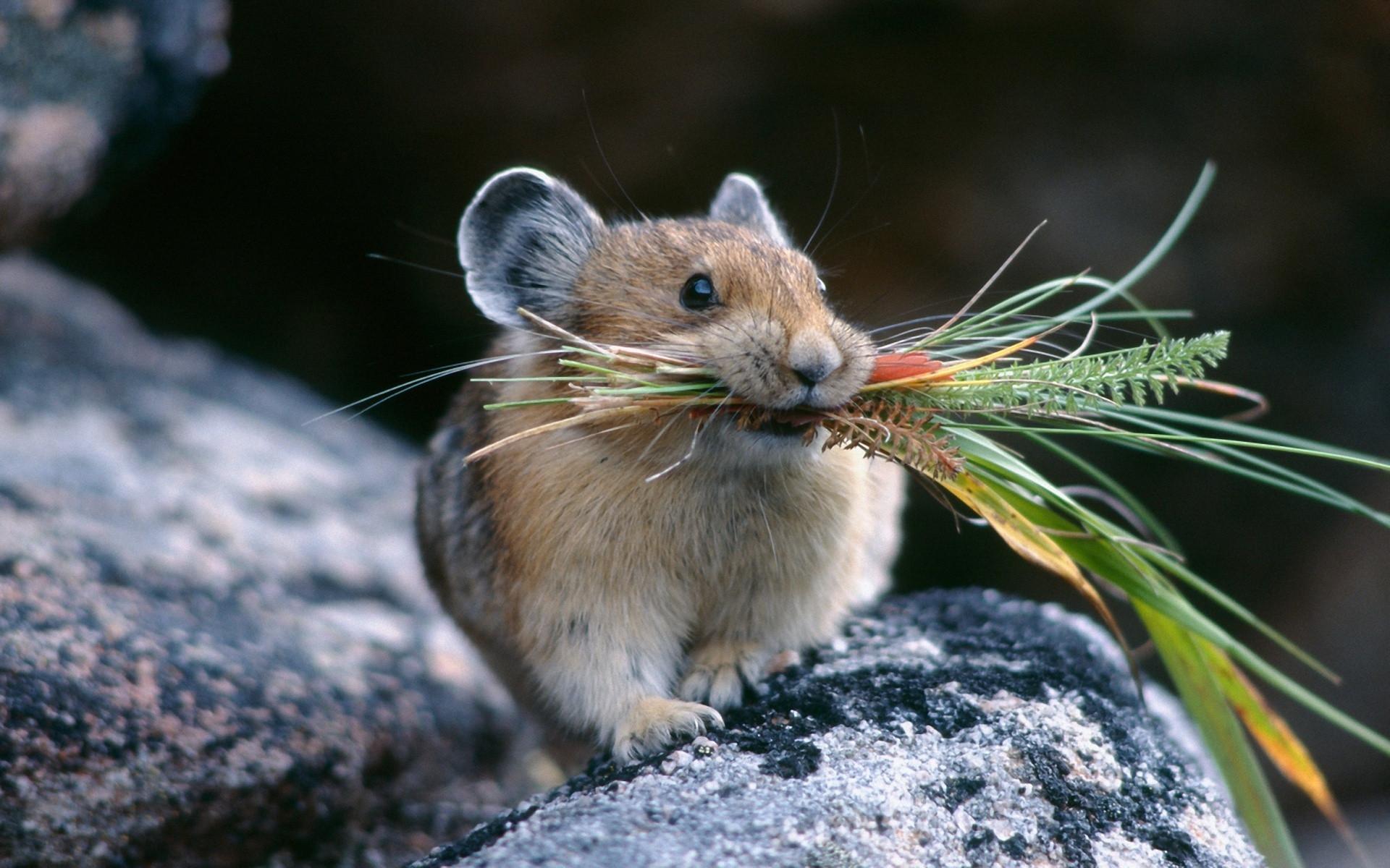 мышка и трава