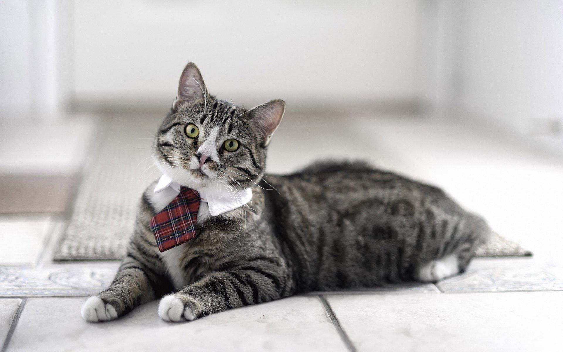 офисный кот